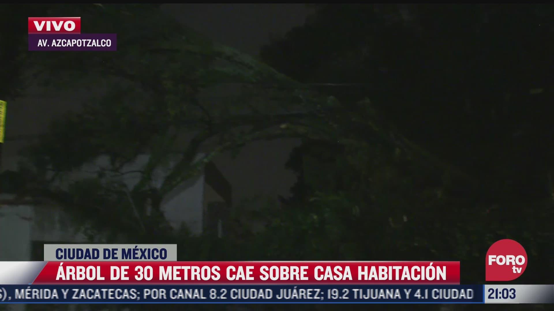 arbol de 30 metros cae sobre casa habitacion en av azcapotzalco