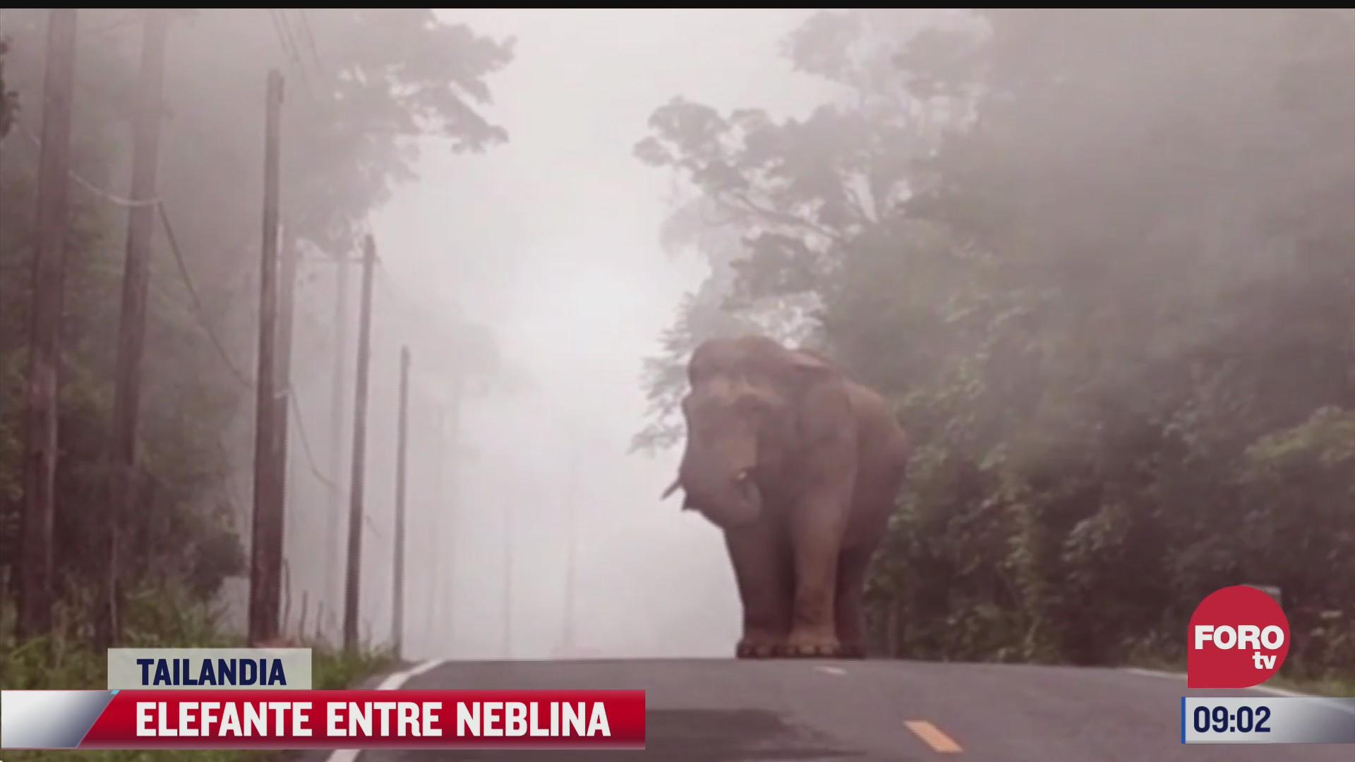 captan a elefante entre arboles y neblina