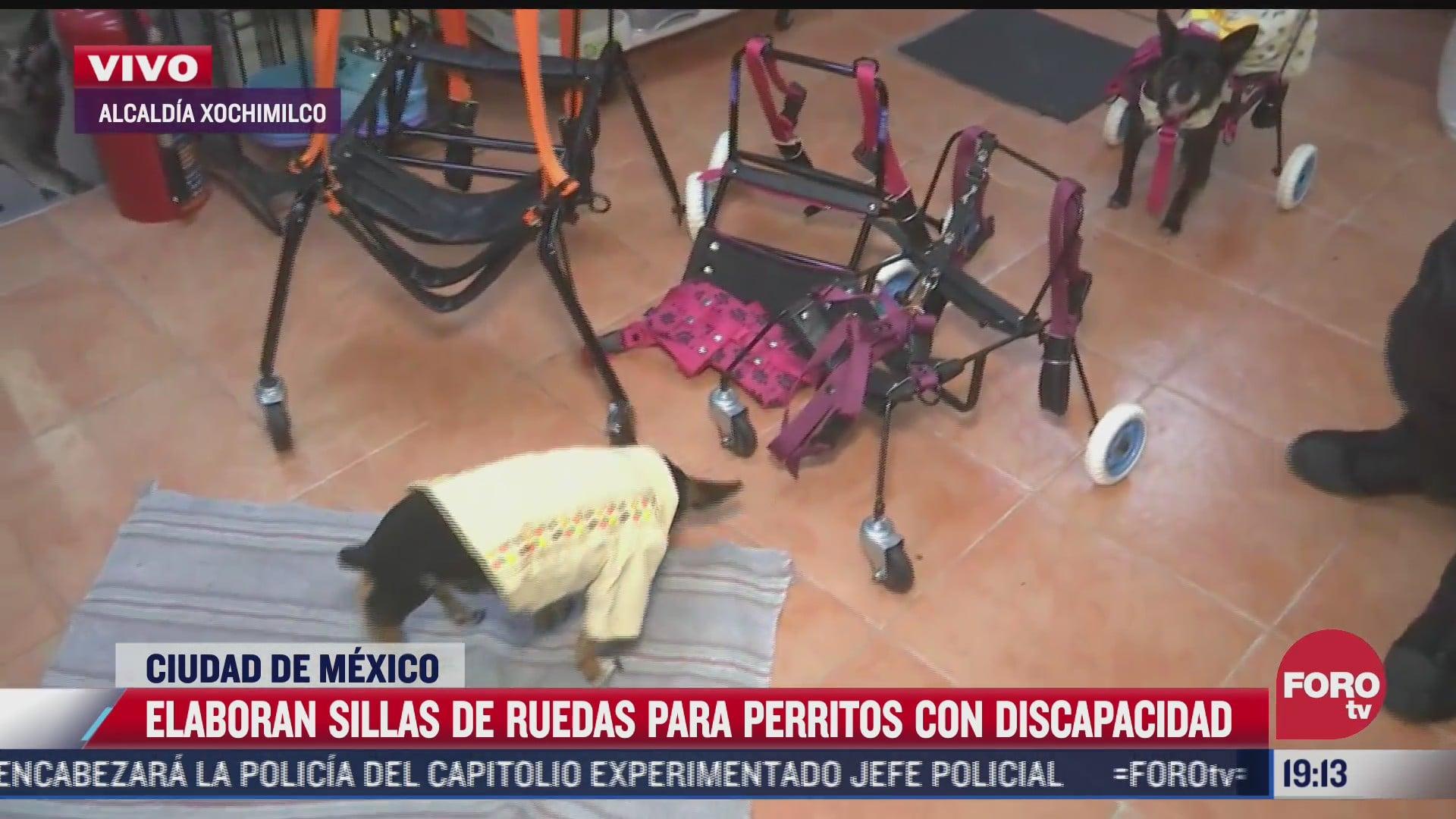 car can crea sillas de ruedas para perritos con discapacidad