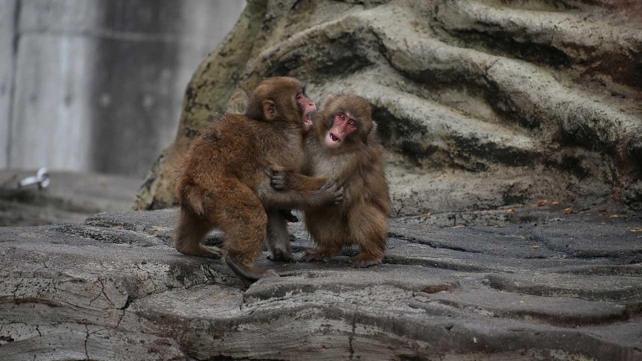 China informa primera muerte humana por virus del mono B
