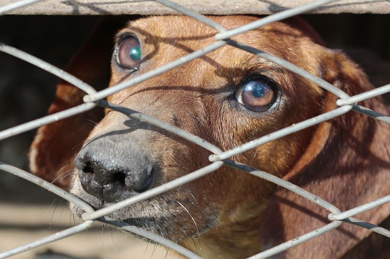 Joven secuestró un perro maltradado en Argentina