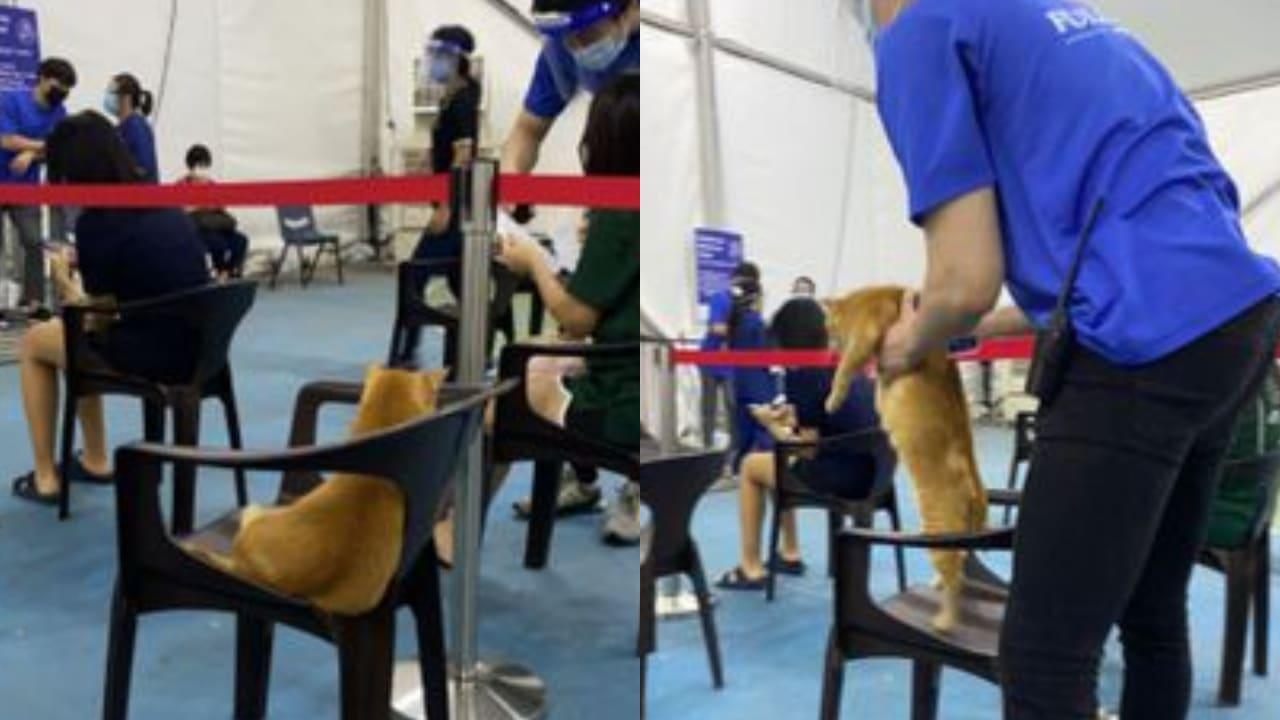 Viral: Gatito 'se coló' a centro de vacunación COVID-19