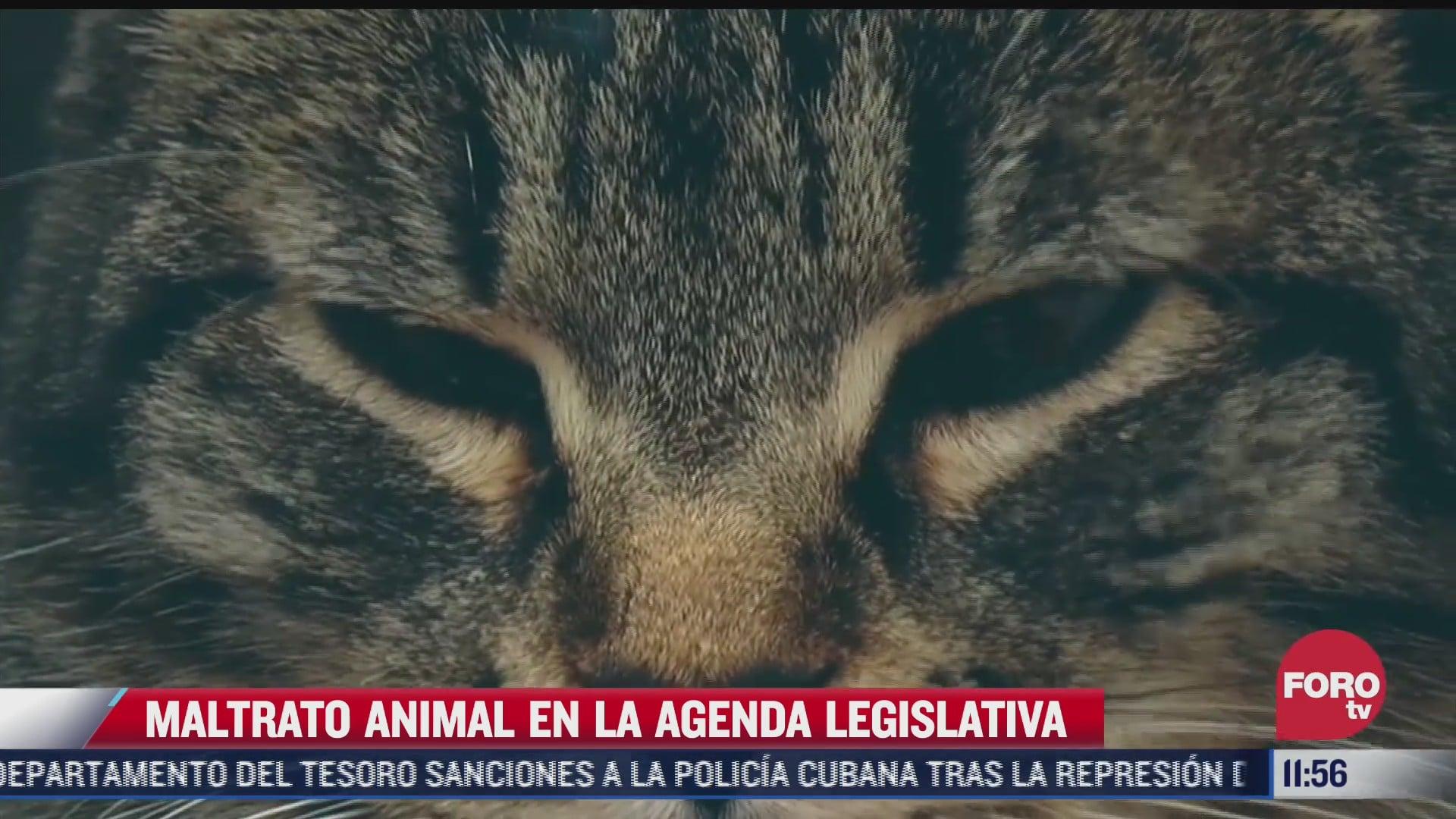el maltrato animal en la agenda legislativa