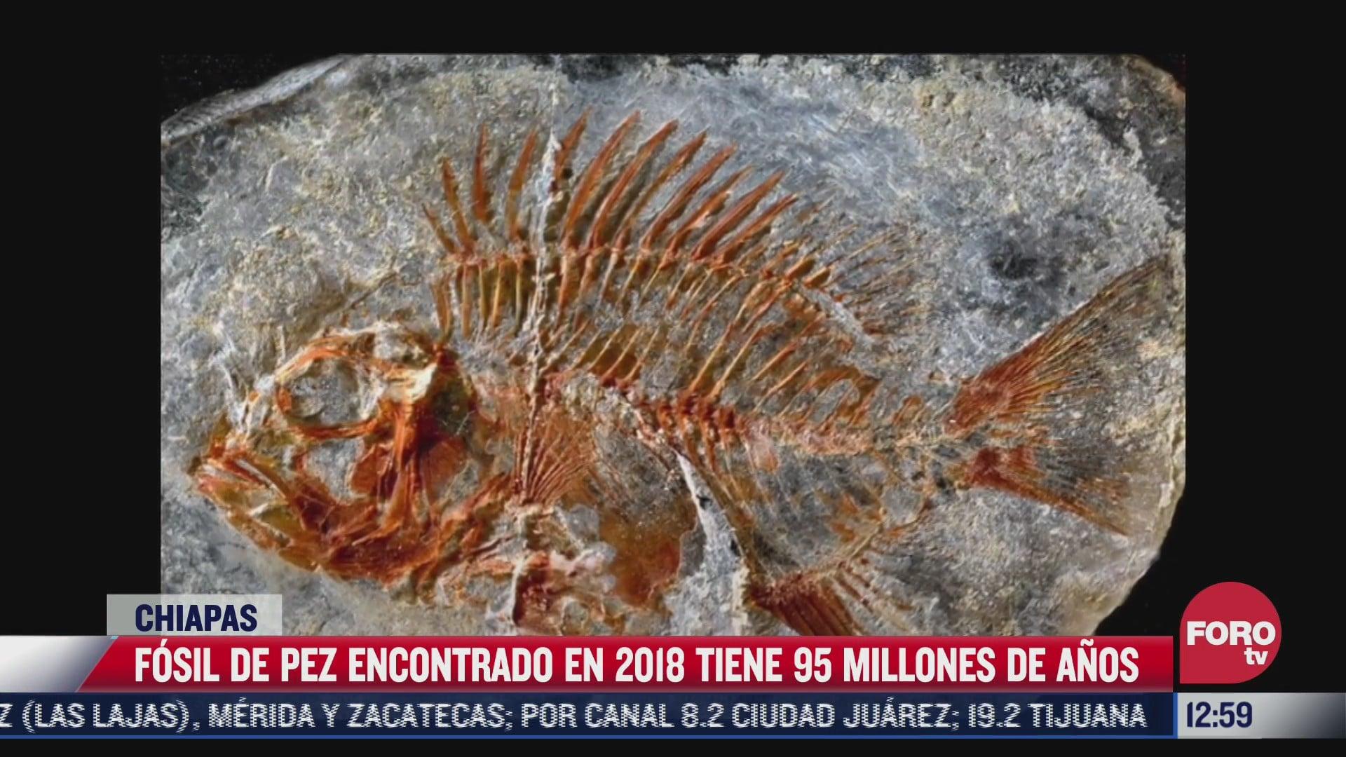 encuentran especie de pez de la epoca de los dinosaurios en chiapas