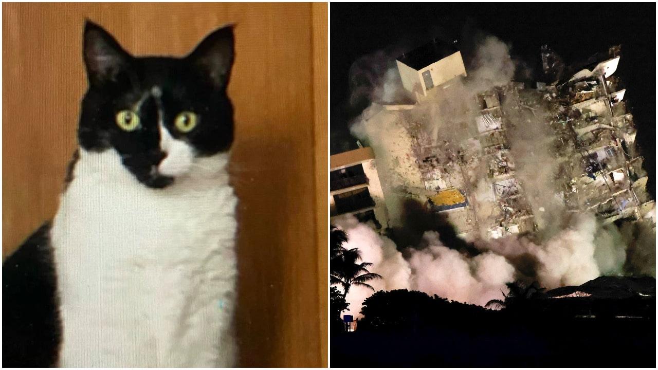 gato, miami, edificio, colapso, demolición