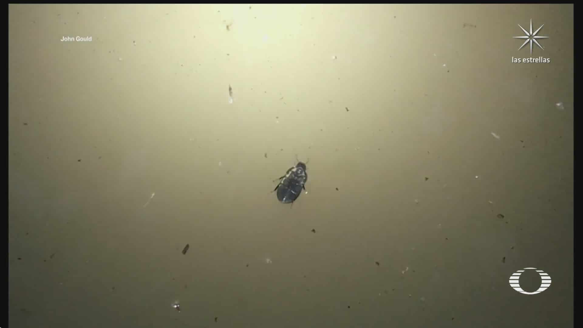 graban a escarabajo caminando debajo del agua