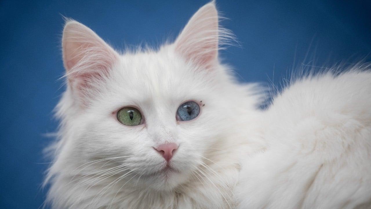 Dan más de cinco años de cárcel a hombre por acuchillar y matar gatos