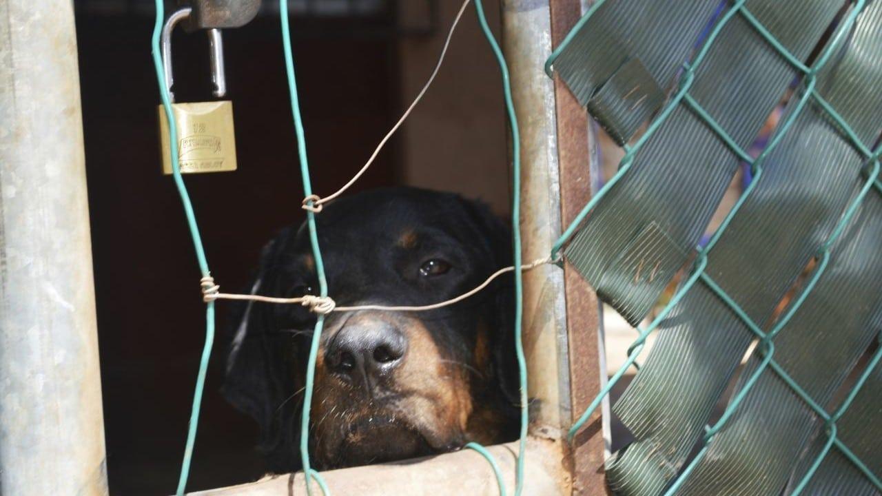 Maltrato animal contra animales (Cuartoscuro, archivo)