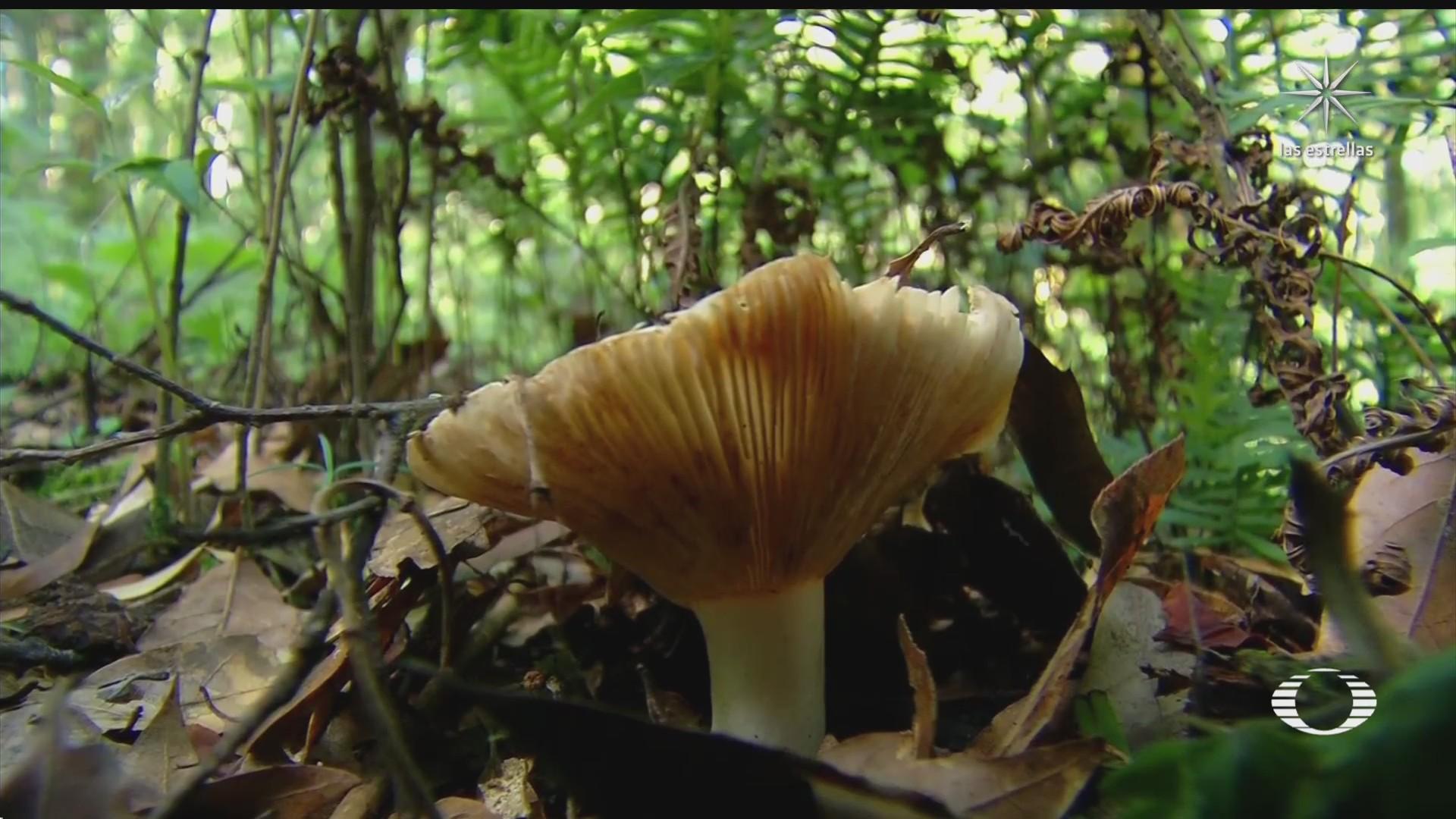 mas de 20 variedades de hongos pueden encontrarse en hidalgo