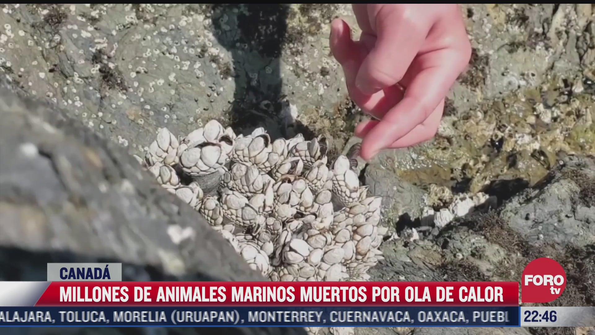 millones de animales marinos muertos por ola de calor en canada