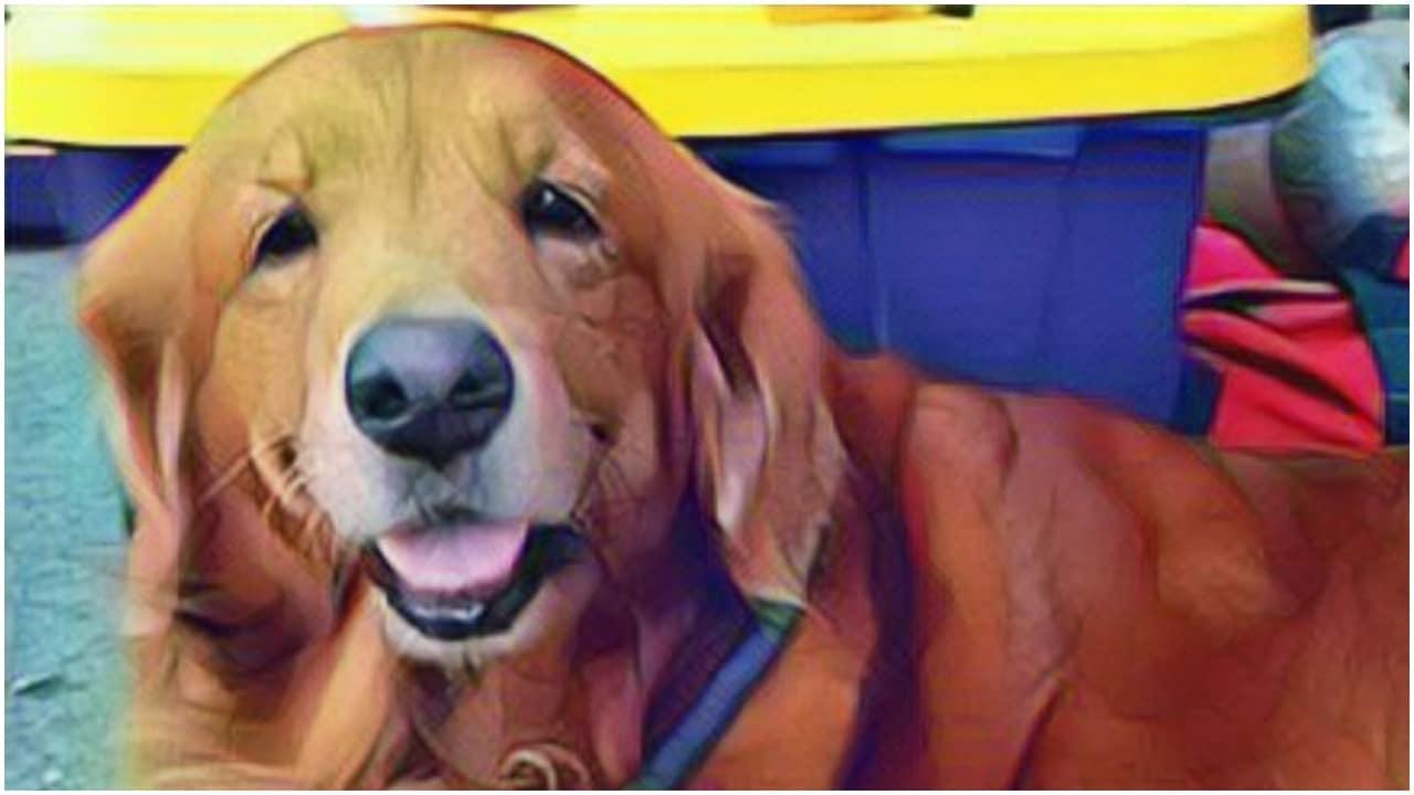 Muere Alondra, perra de rescate que participó en el sismo de 2017