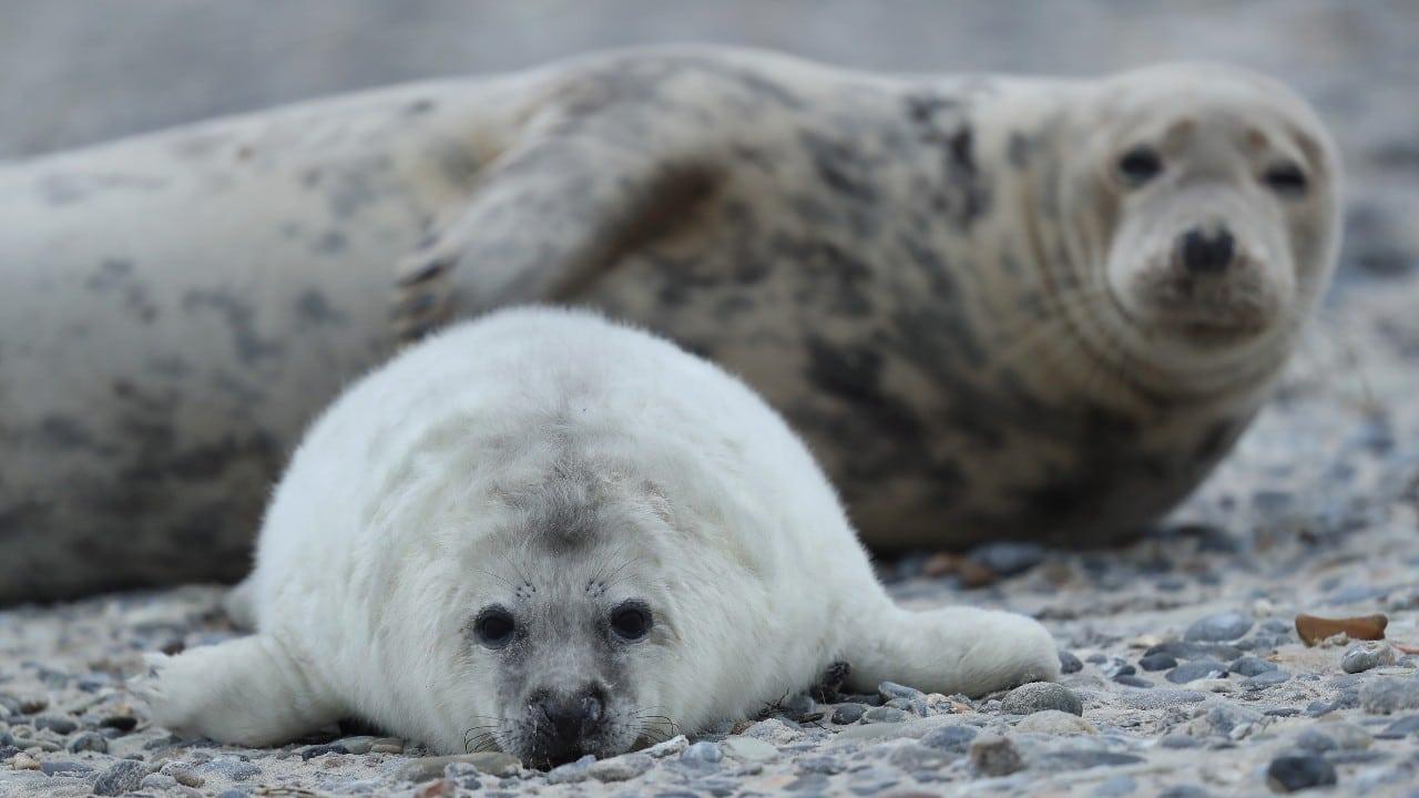 Muerte de foca causa indignación en Grecia