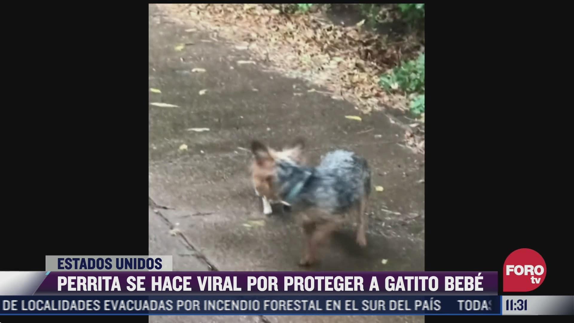 perrita se hace viral por proteger a gatito bebe de la lluvia