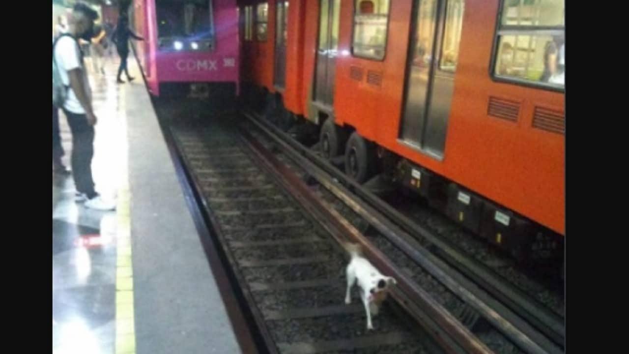 Rescatan a perrito que cayó a vías del Metro Iztapalapa