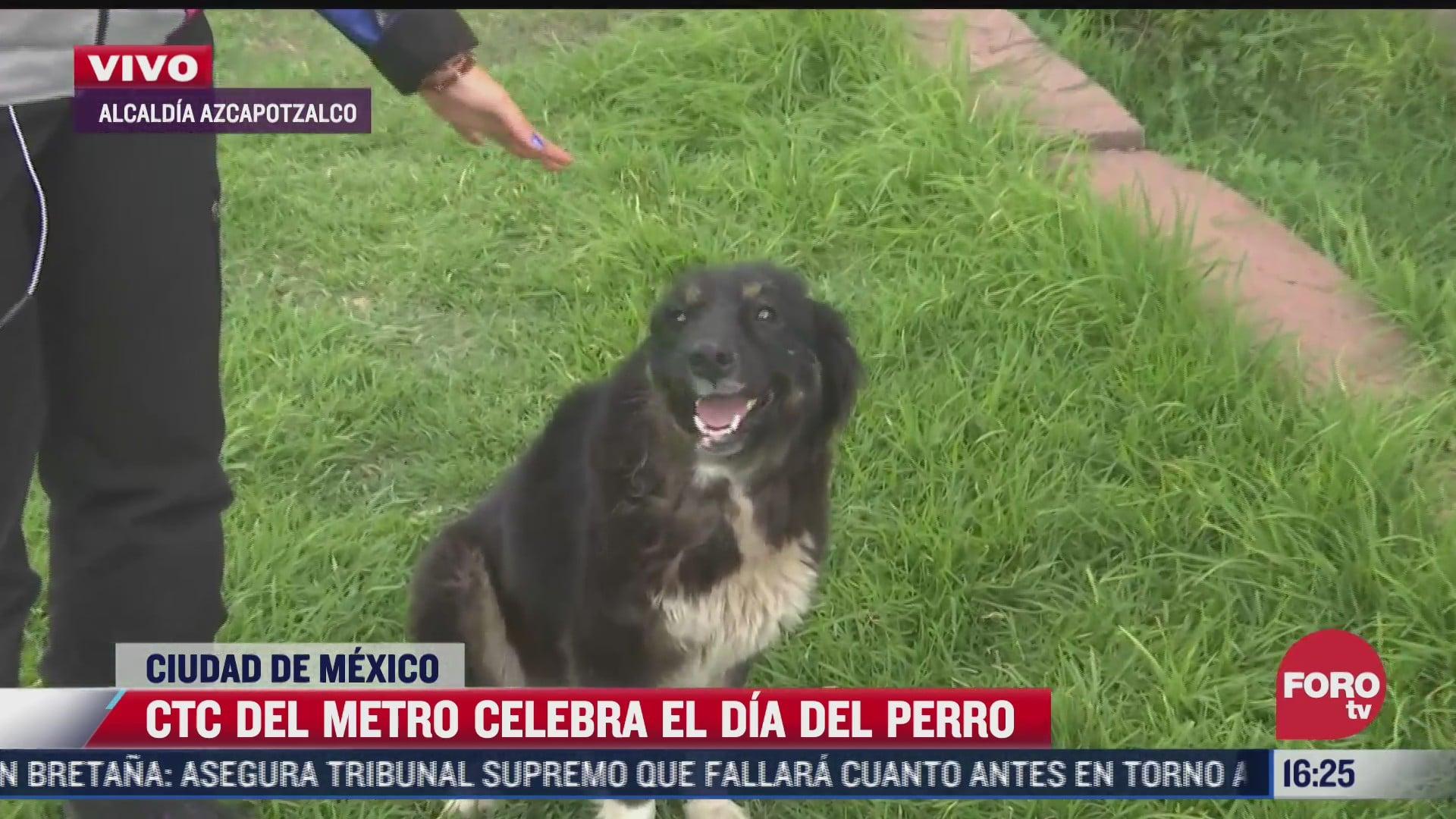 perritos que fueron rescatados en las instalaciones del metro buscan un hogar