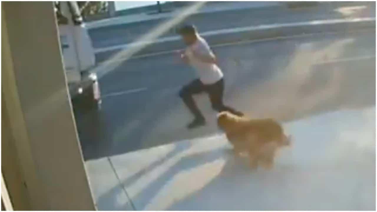 Perro asusta a hombre en Turquía y camión lo atropella