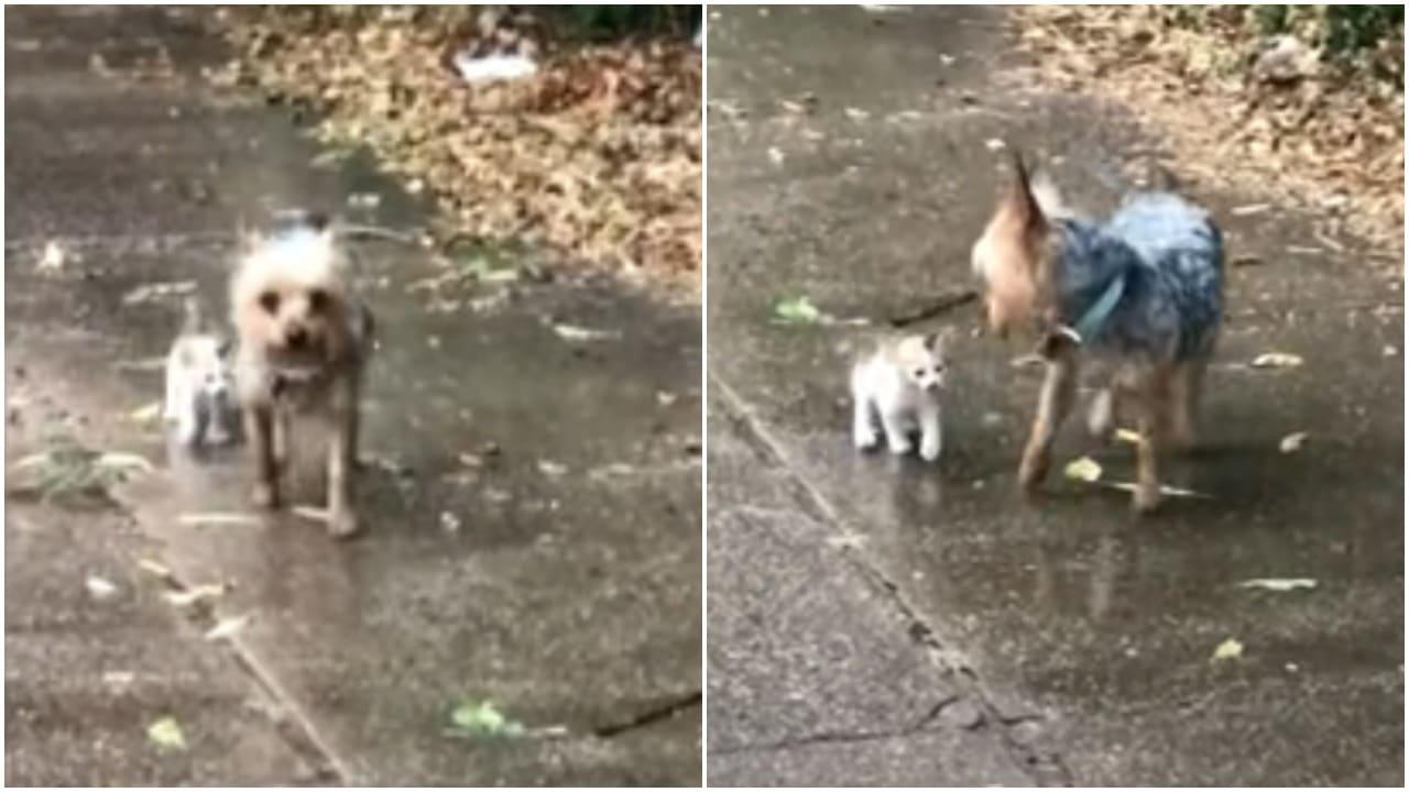 Perro protagoniza rescate de gato en Texas al llevarlo a casa: video