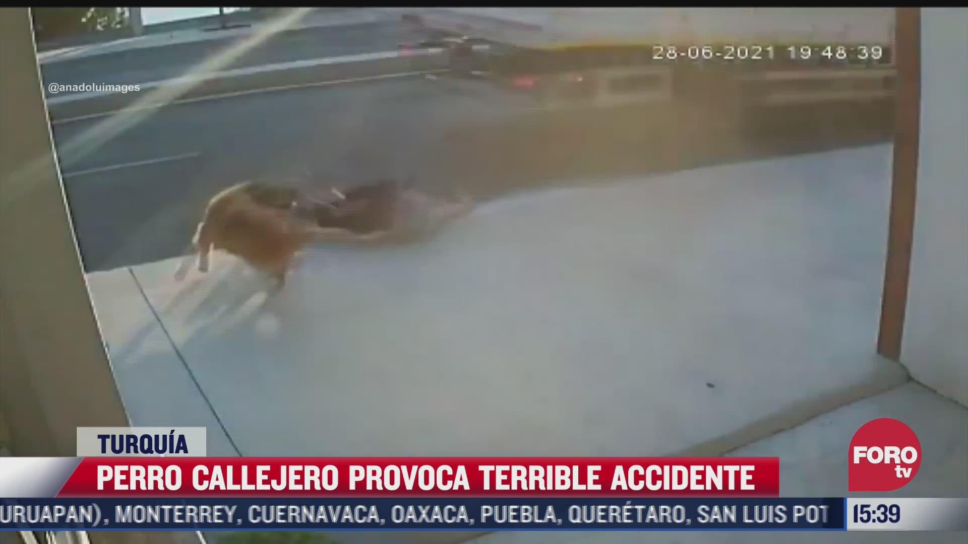 perro callejero provoca terrible accidente en turquia