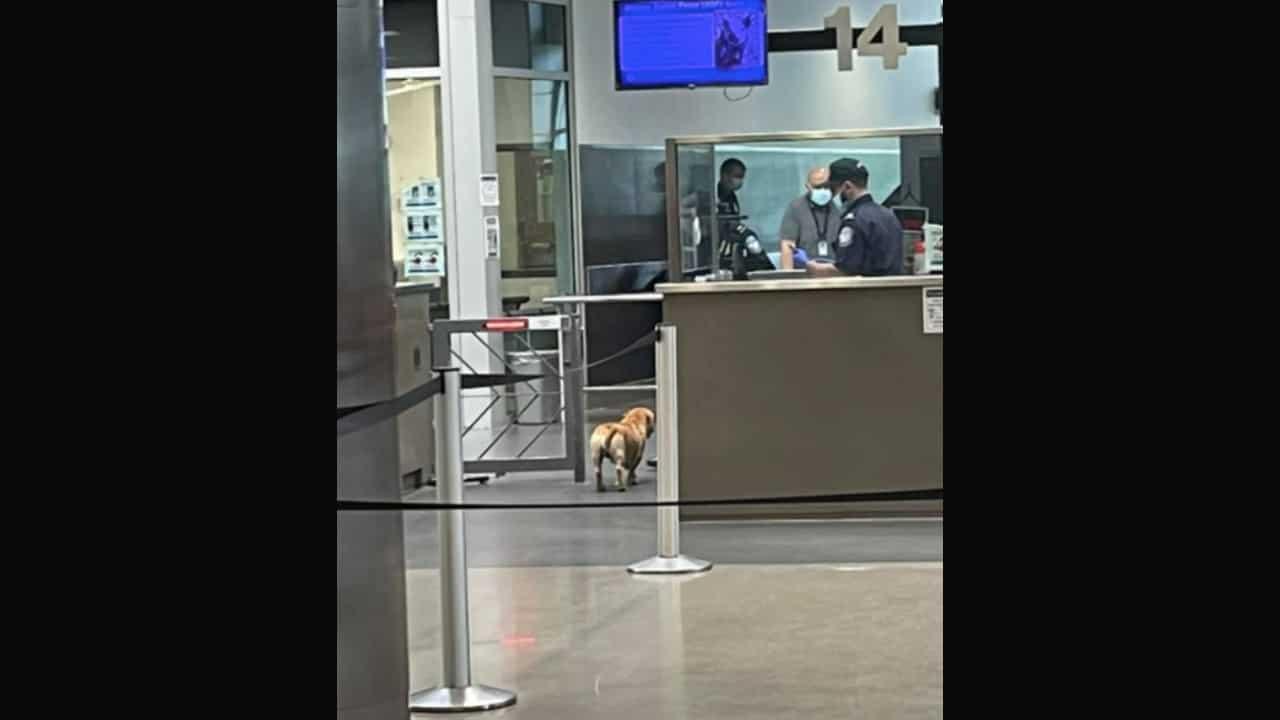 Perrito cruza la frontera con Estados Unidos