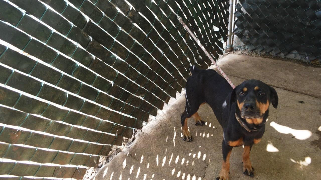 Maltrato animal se castigará con hasta dos años de cárcel