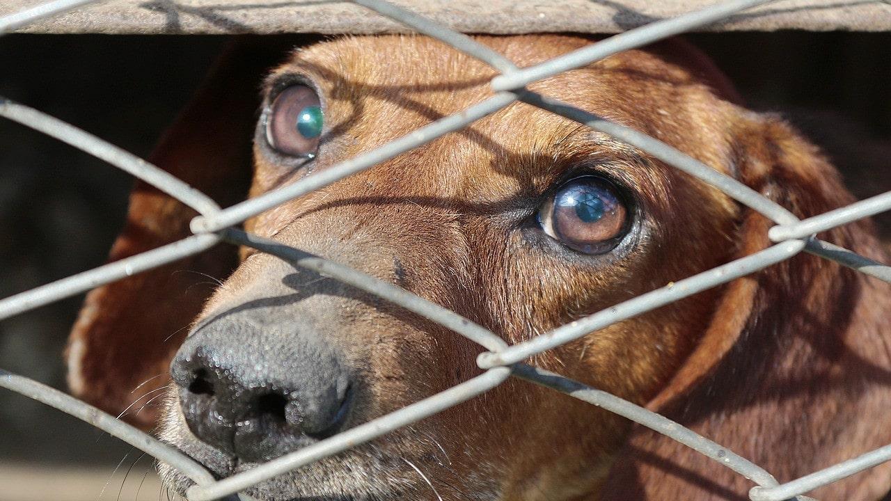 Maltrato animal, perro, Tlalnepantla, imagen ilustrativa