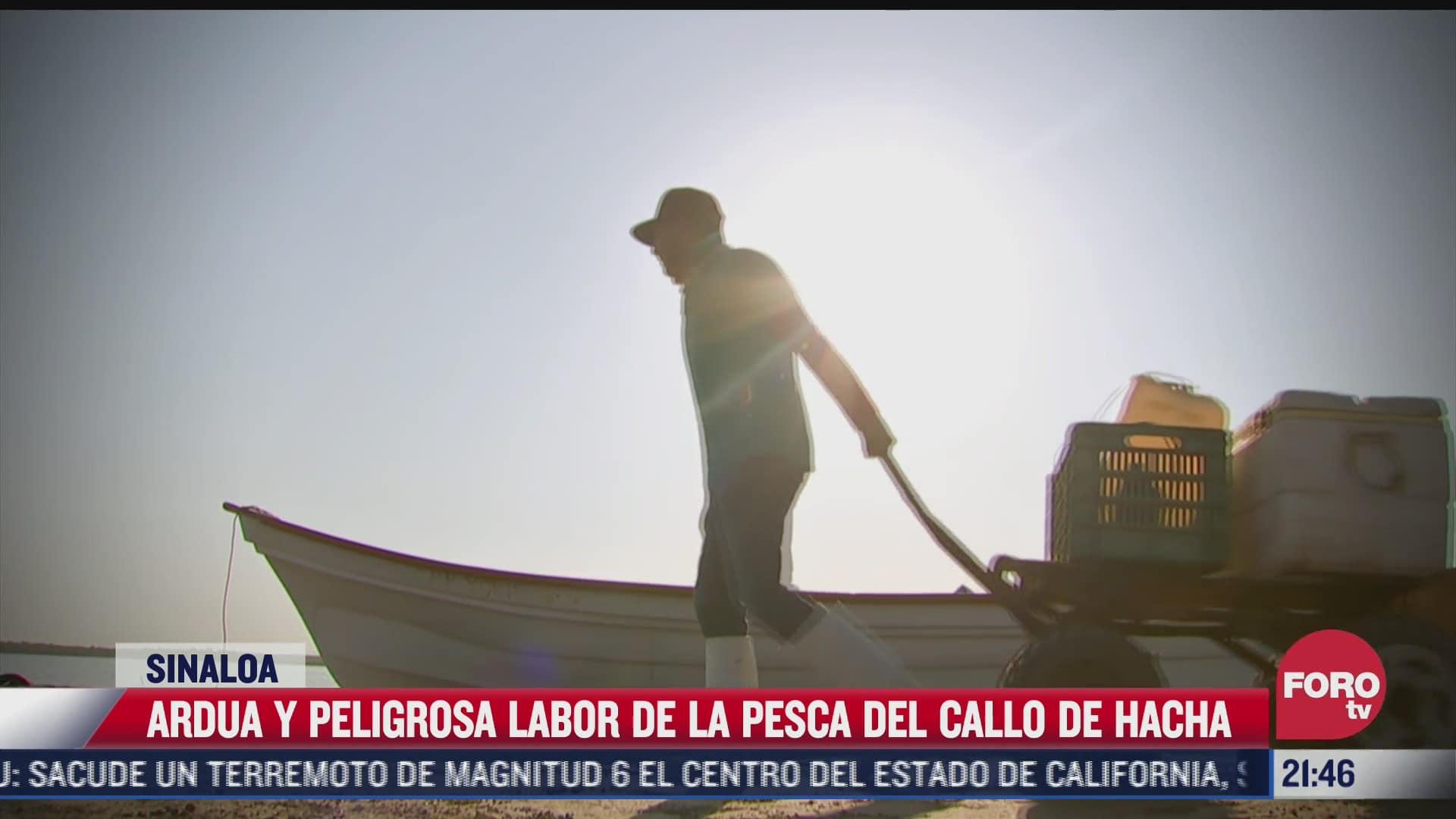 pescadores de callo de hacha arriesgan su vida para salir adelante