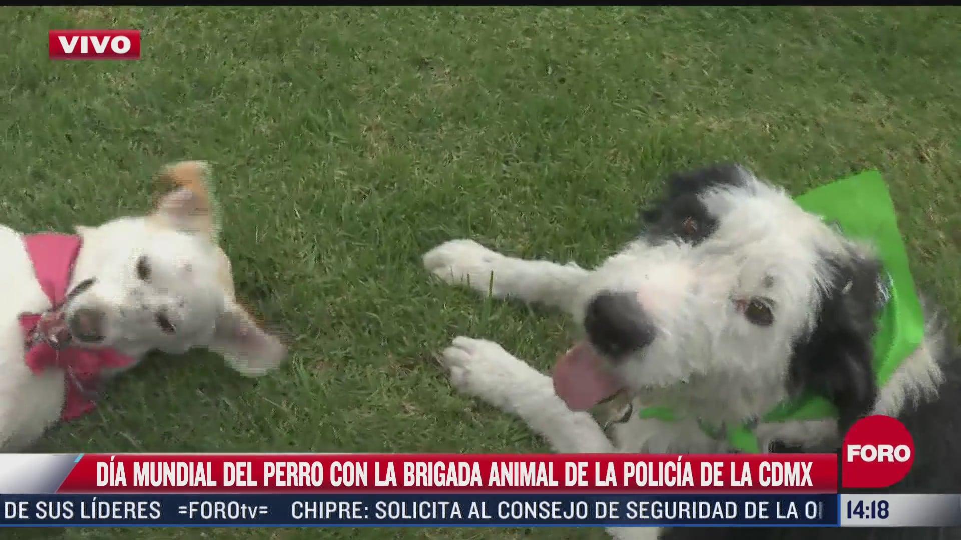 piden conciencia en el dia mundial del perro