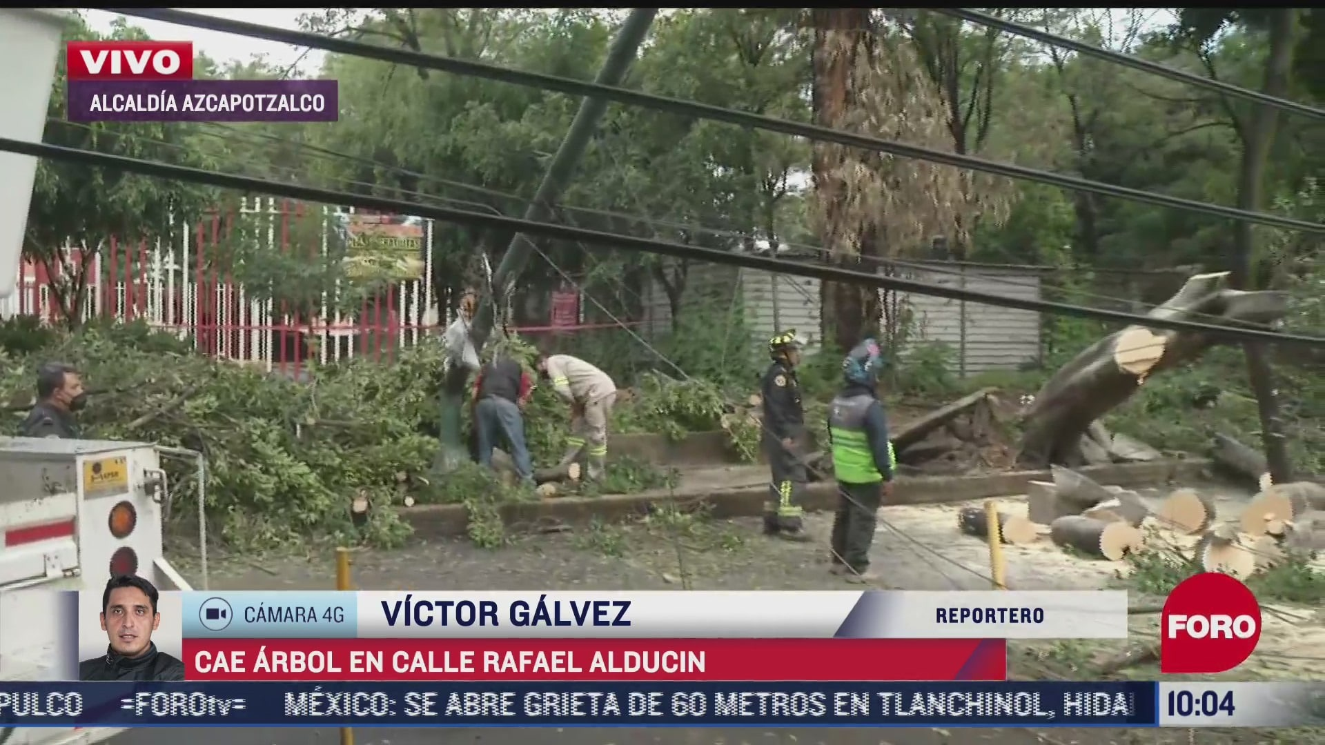 Cae árbol en calles de la alcaldía Azcapotzalco