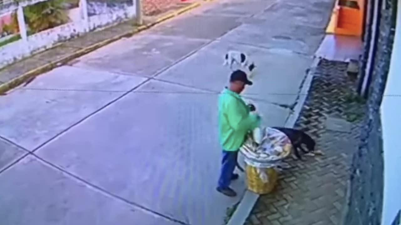 Video: Vendedor de comida alimenta a perritos callejeros