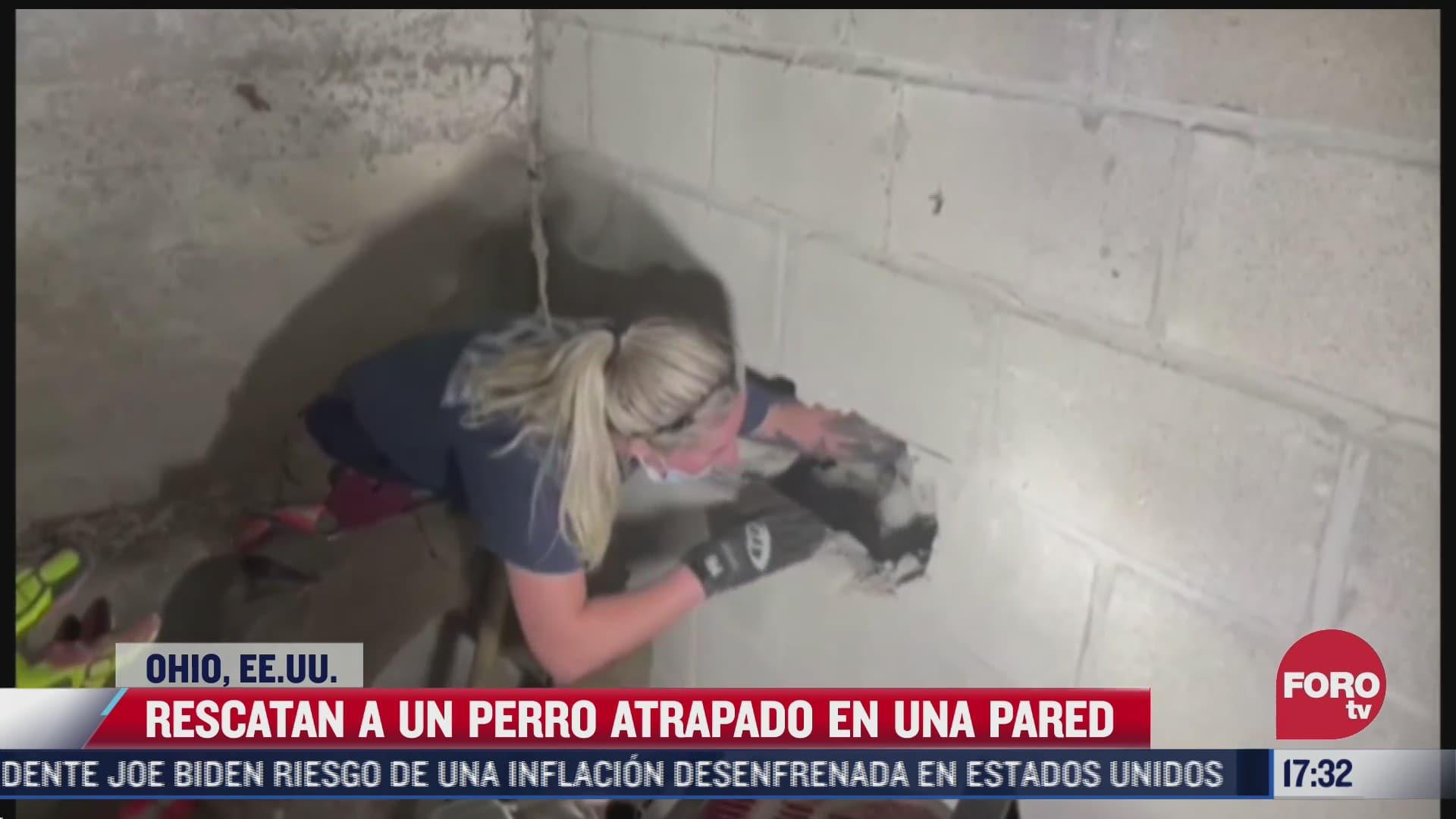 video rescatan a un perro atrapado en una pared