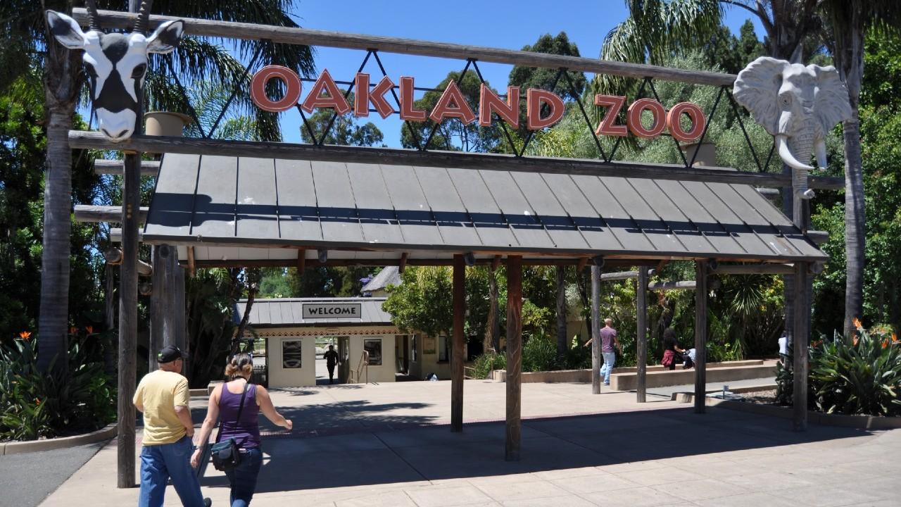 Inicia vacunación COVID de animales en zoológico de Oakland