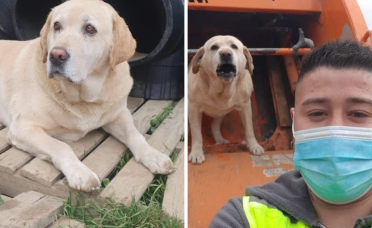 Perro recolector de basura se vuelve viral en Chile