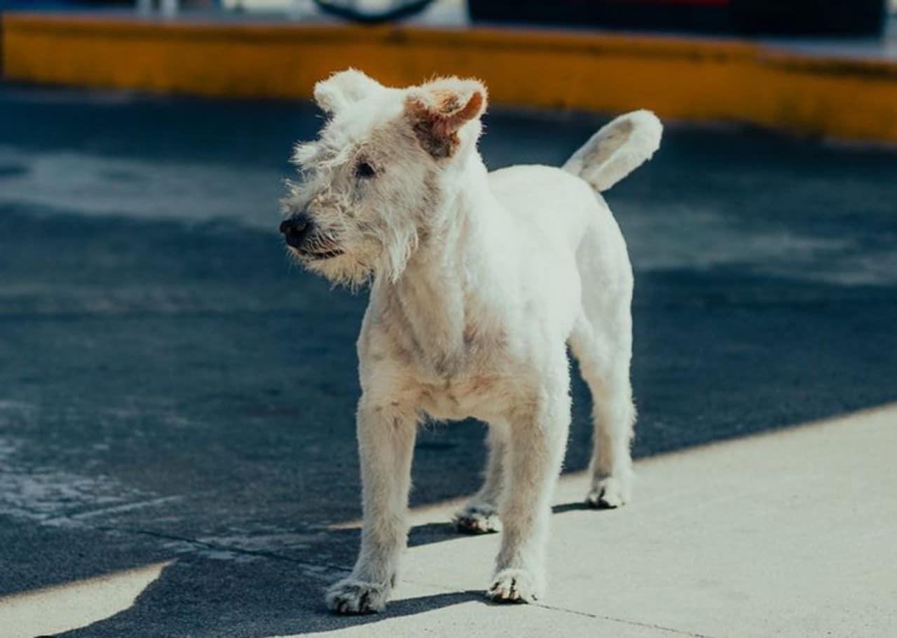 'Gasolín', el perro que trabaja en una gasolinera de Tecate