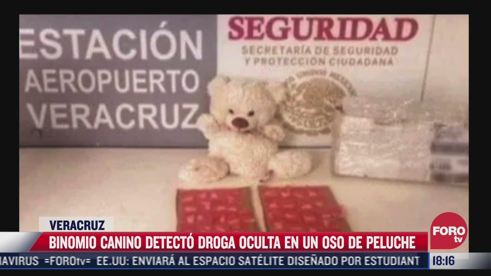 binomio canino detecta droga oculta en oso de peluche