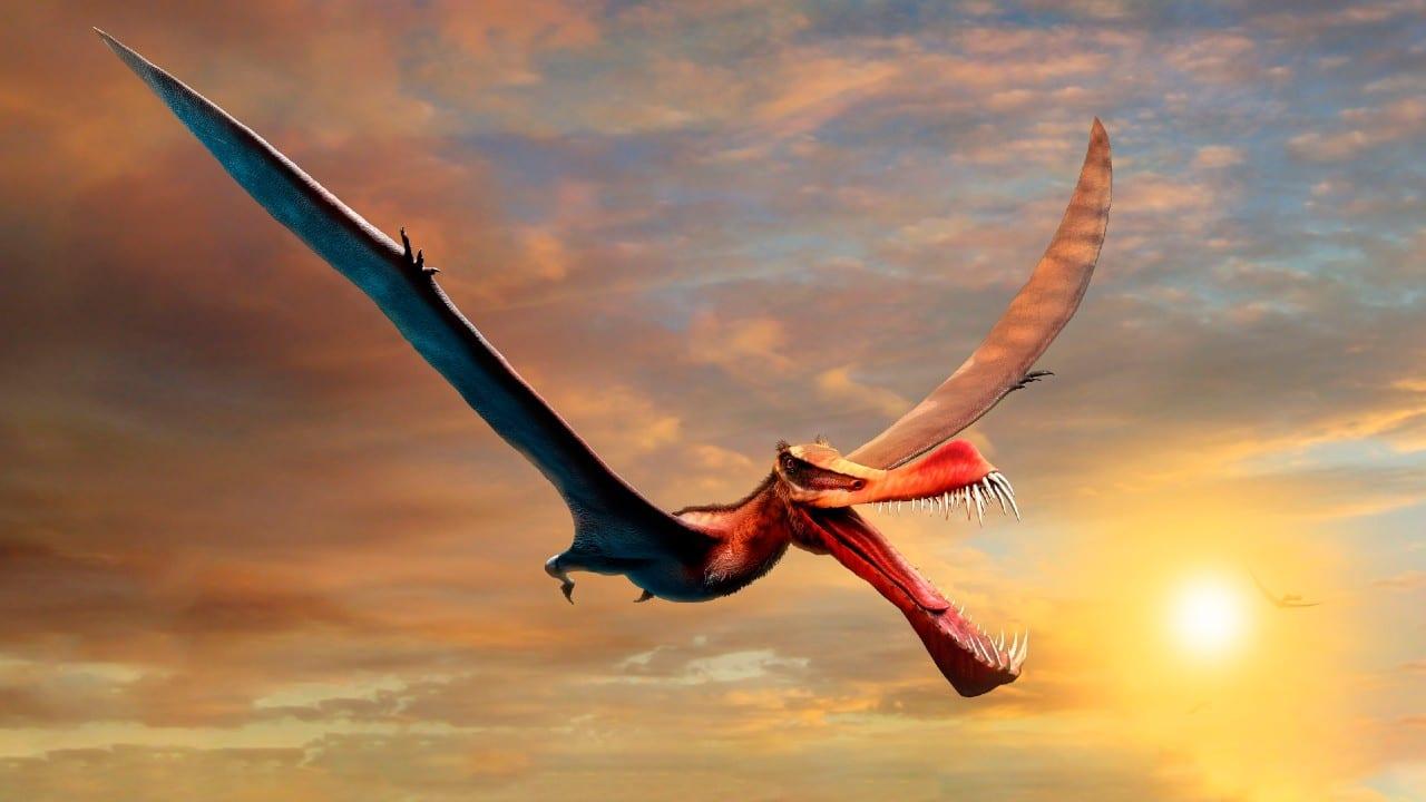 Descubren restos de un dinosaurio volador, descrito como 'temible dragón', en Australia.