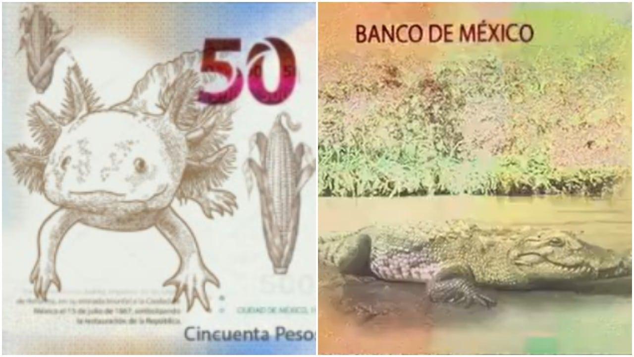 Diseños no oficiales de los billetes de 20 y 50 pesos se hacen virales