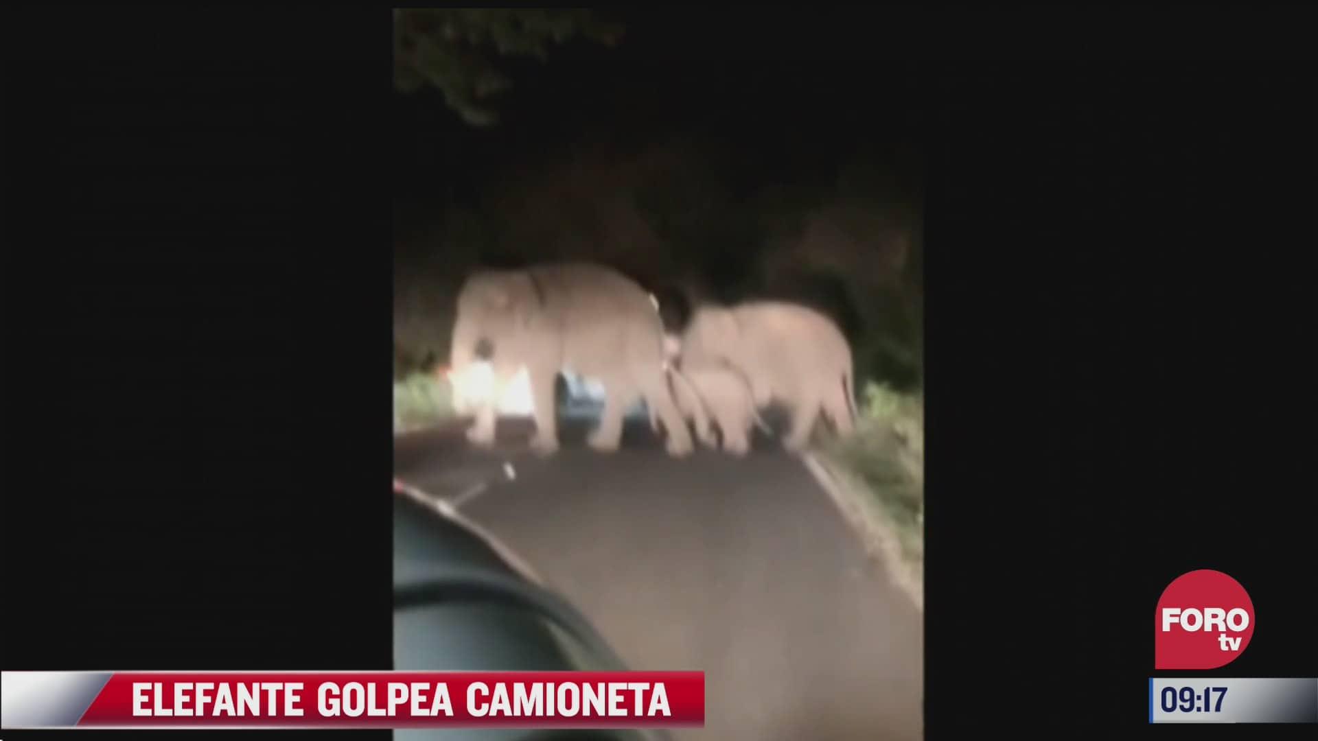 elefante enojado golpea vehiculo en la india