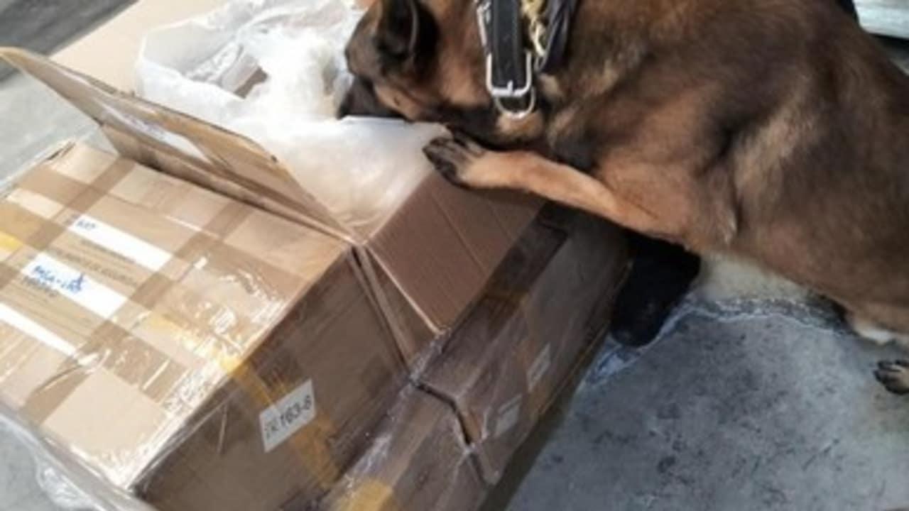 MARINA, Guardia Nacional y Aduanas decomisan 204 kilogramos de fentanilo en la Aduana del AICM procedente de Hong-Kong