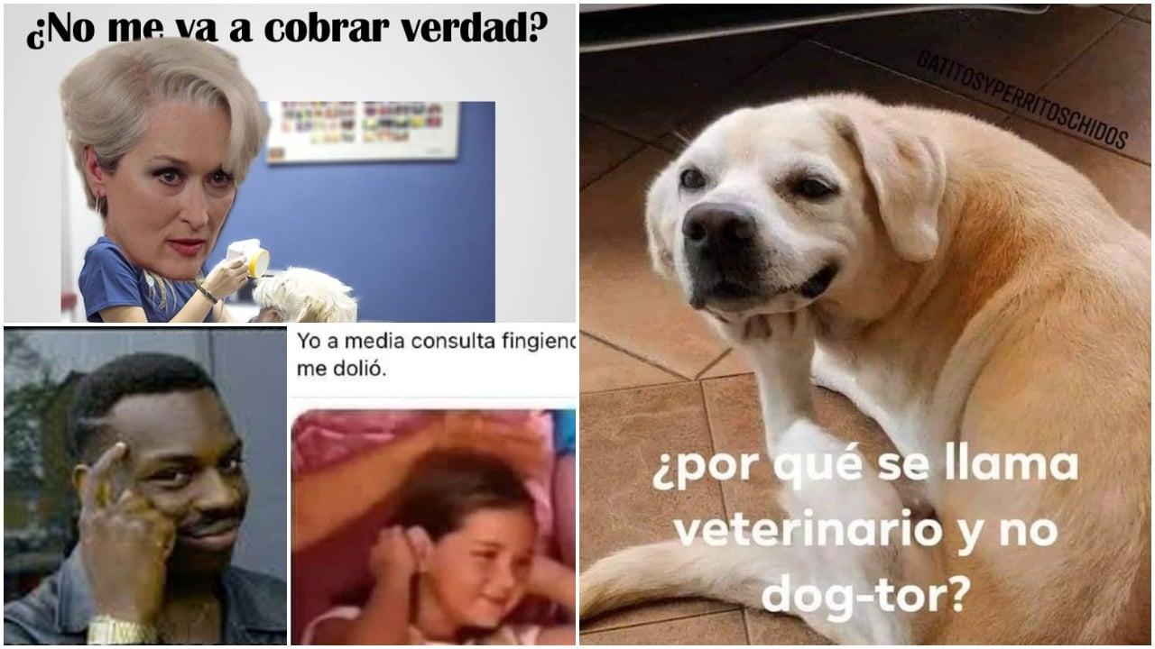 Memes del Día del Veterinario celebrado en México el 17 de agosto
