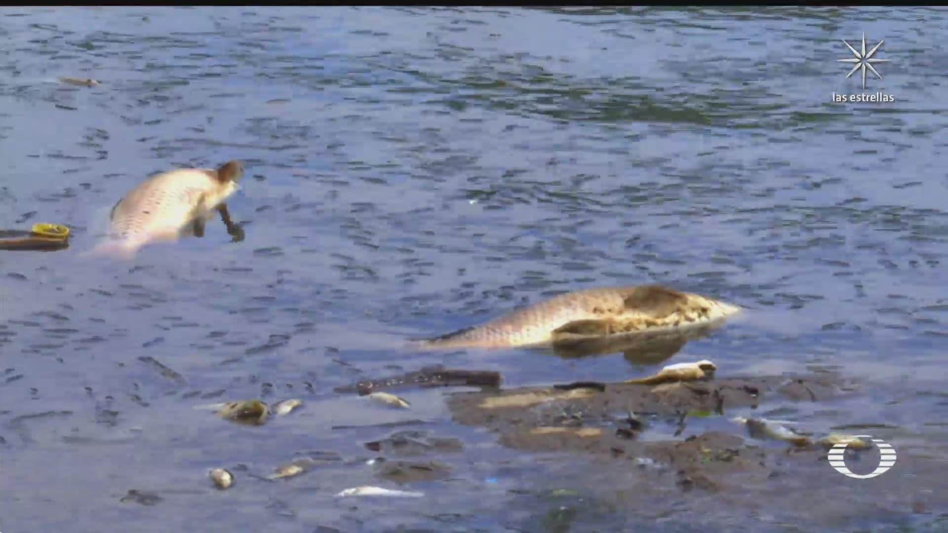 mueren peces de la presa madin en edomex