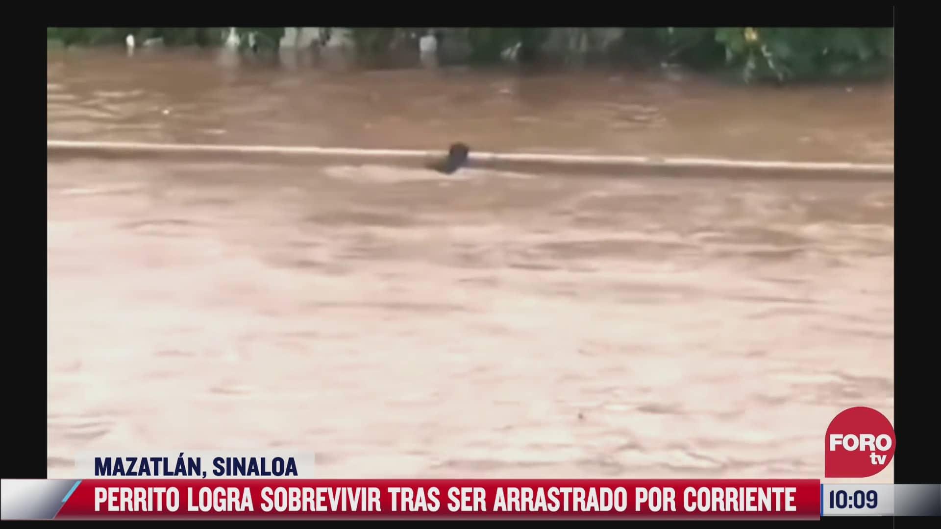 perrito logra sobrevivir tras ser arrastrado por corriente de rio