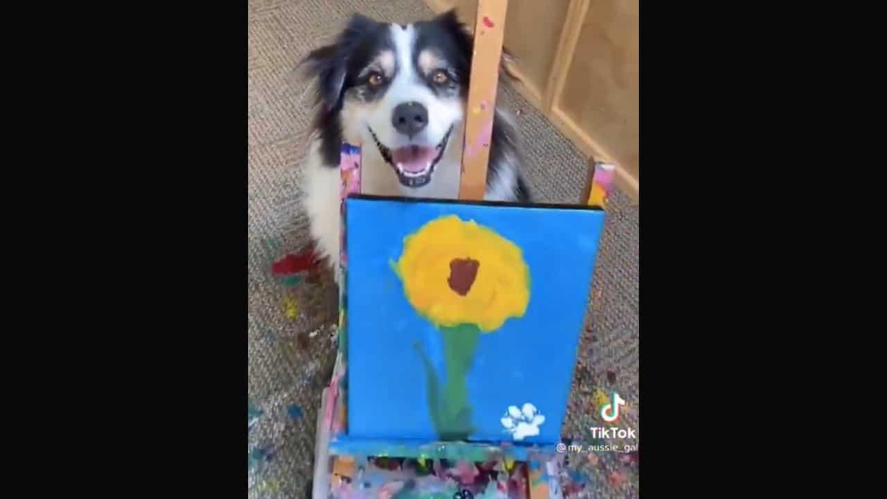 Perrito pinta cuadro y se vuelve viral