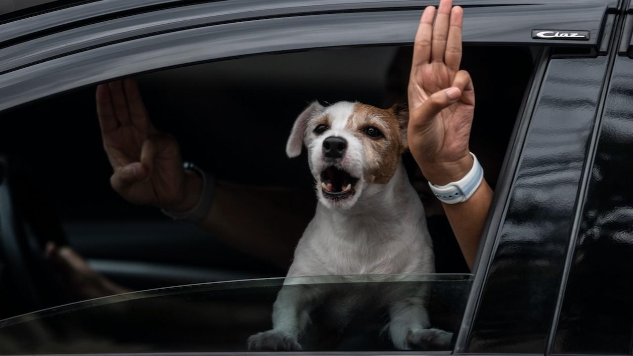 Sanciones por maltratar a un animal (Archivo, Getty Images)