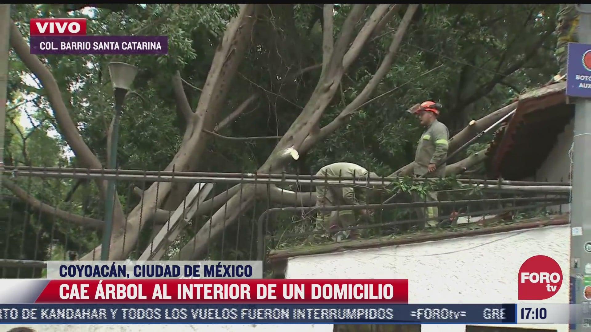 reportan caida de un arbol en santa catarina en coyoacan