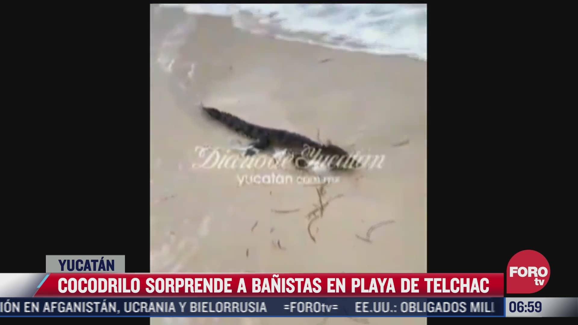rescatan cocodrilo que estaba en el mar en yucatan