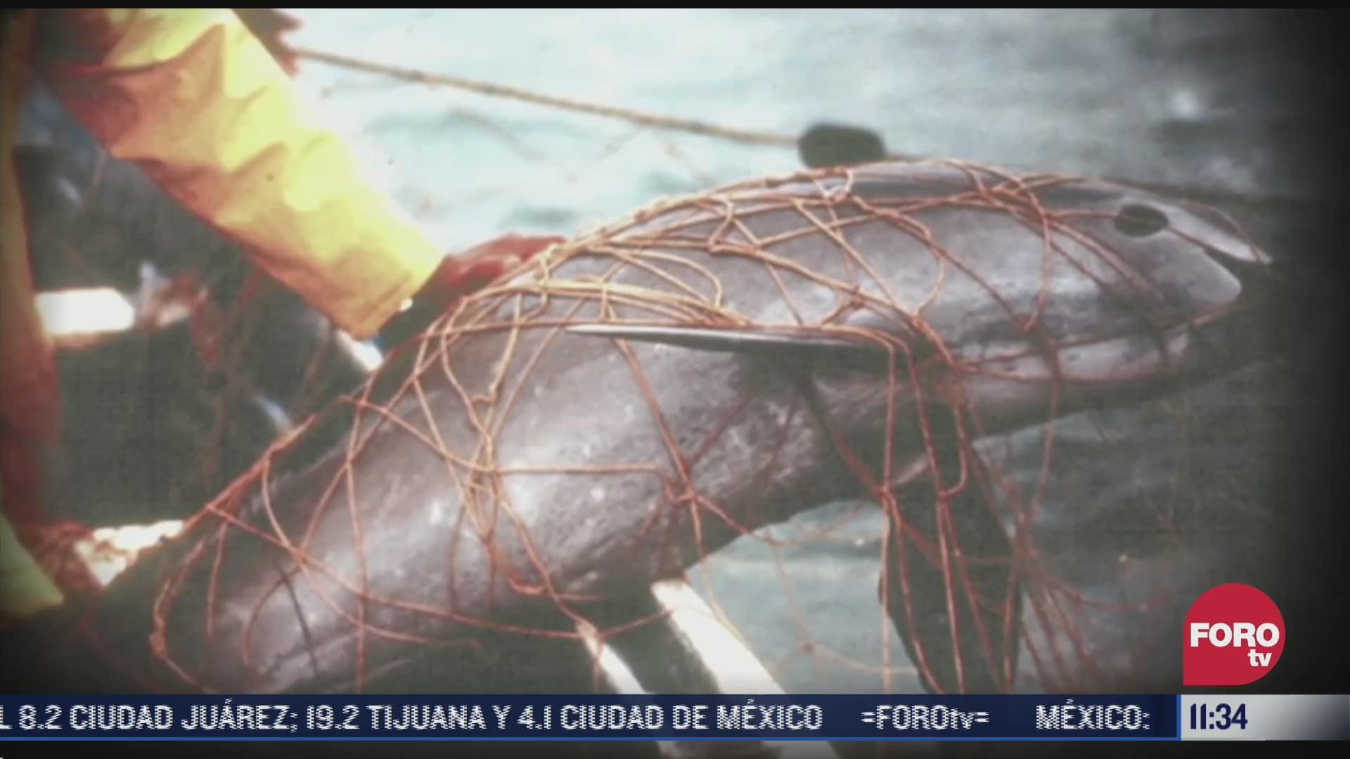 sin acuerdos para proteger a la vaquita marina en baja california