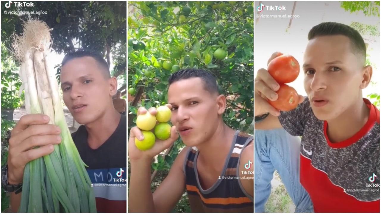 tiktok, video viral, Venezuela, agricultura, huerto, captura de pantalla
