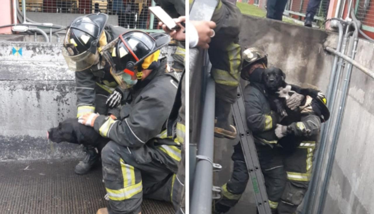 Bomberos rescatan a perro que cayó en fosa pluvial en la GAM