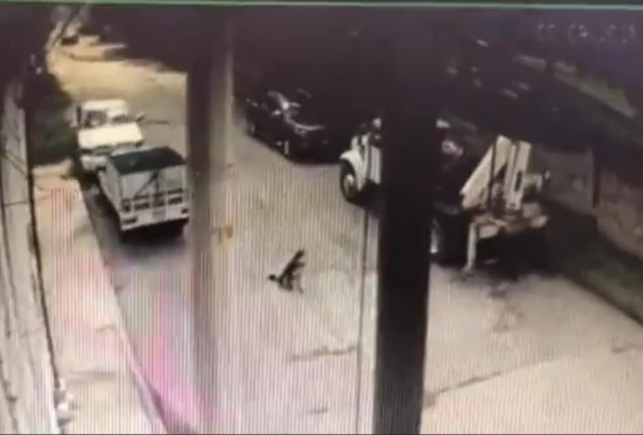 Video del perro Rolo atropellado por policías