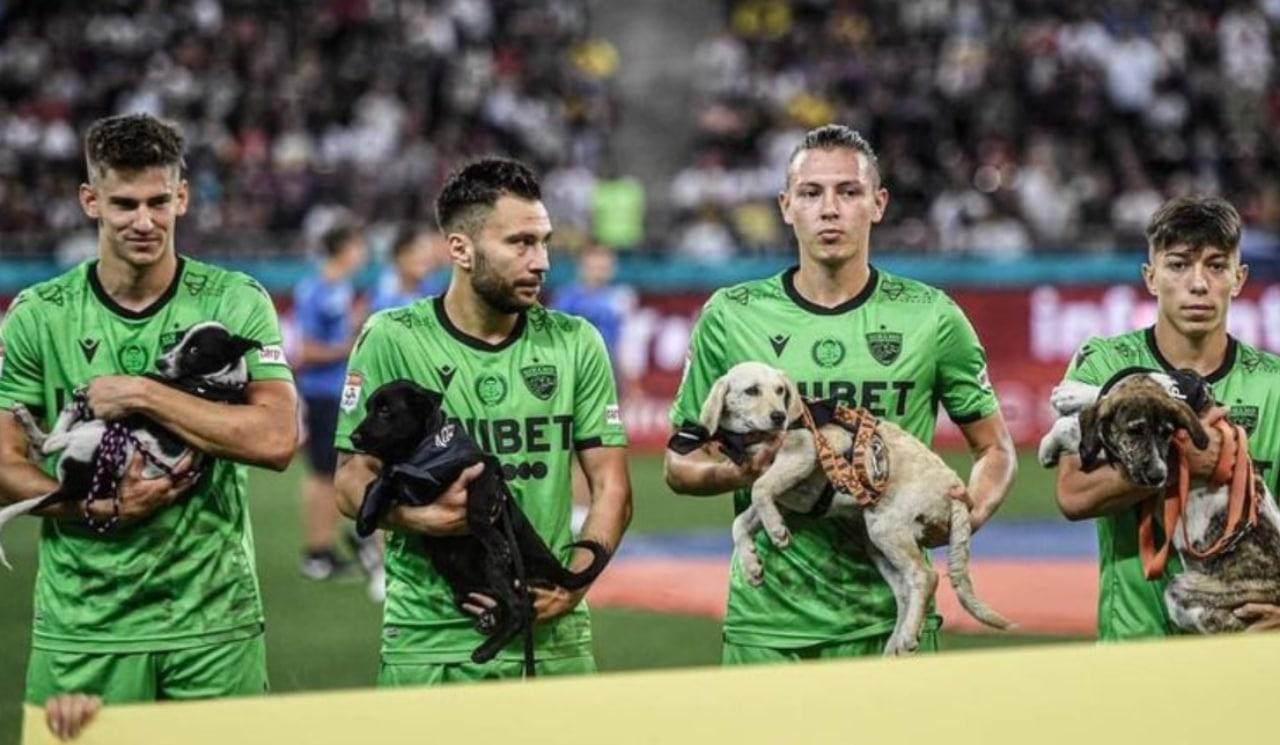 Ofrecen perros en adopción en partidos de futbol en Rumania